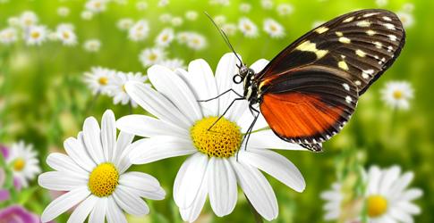 banner_biolubrifiants_fleur_papillon